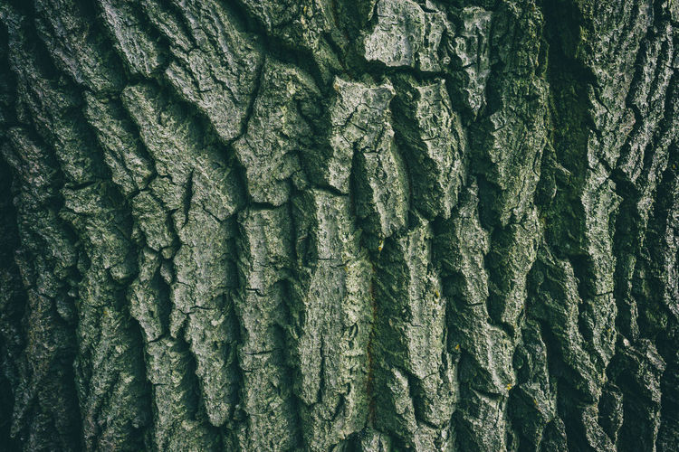 Close-up of tree bark Berlin Germany 🇩🇪 Deutschland Horizontal Tree Backgrounds Bark Texture Close-up Color Image Day Full Frame Nature No People Outdoors Park Pattern Textured  Tiergarten Berlin