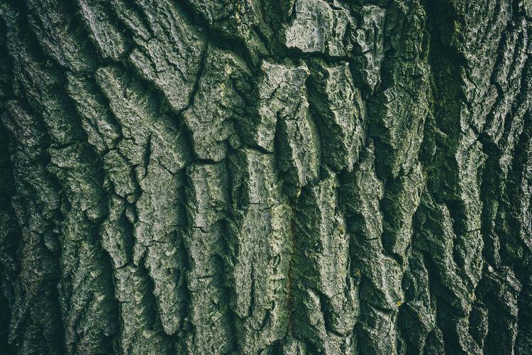 Full frame shot of bark