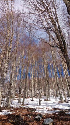 bosco Forest