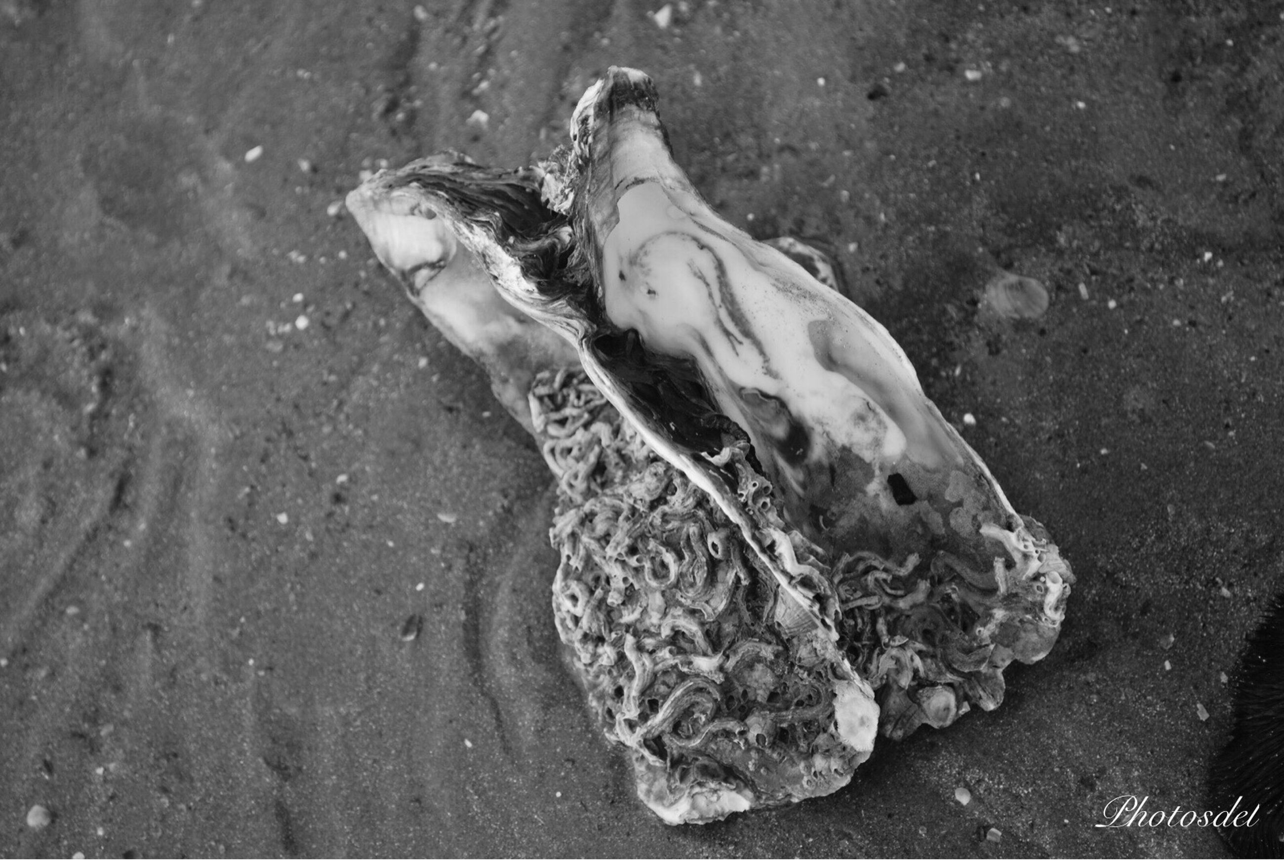 high angle view, water, animal themes, dead animal, sand, wet, day, nature, outdoors, fish, wildlife, one animal, reflection, animals in the wild, pond, no people, close-up, beach, puddle, sunlight