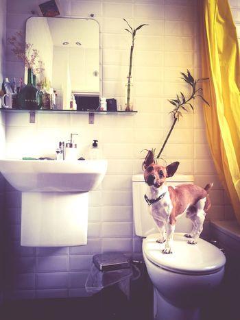 Dog Training Gooddog Thebest Themaster My Dog Is Cooler Than Your Kid. Toilet Bestfriend Guapo Giro