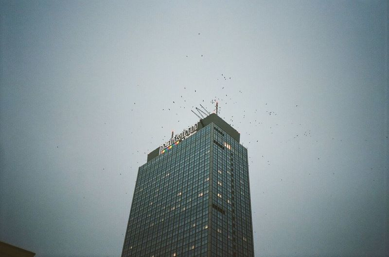 Alexander 1 Birds Film 35mm Yashica Architecture Skyscraper Built Structure Building Exterior No People Low Angle View