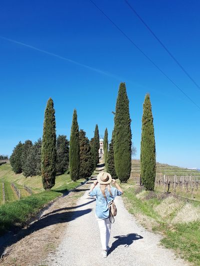 Cypress Collio Friuli Venezia Giulia Vineyard Wine Country Springtime Spring Countryside Country Road Rural Scene Blonde Girl Rear View Back View Hat Looking Spring Is In The Air Walking Around Outdoor Life Away From The City Italianlandscape Holiday Moments Vacation Travel Destinations Tranquil Scene Spring Walks Tree Clear Sky Sunlight Pinaceae Sky
