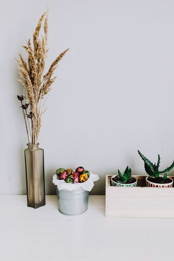 Plant Nature No People Growth Potted Plant Indoors  Wall - Building Feature Decoration Container Freshness Copy Space Vase Beauty In Nature Flower Flowering Plant Food And Drink Food Day Still Life Houseplant