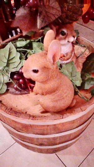 Hello bunnies 🐰🐰💕 Hi!♥ Hello ❤ Hello World Hello EyeEm Cute♡ Cuties <3 Bunnies Restaurant Dinner Taking Photo Taking Picture Hi! ☺ Hey ✌ Hello Barrel Night Night Out