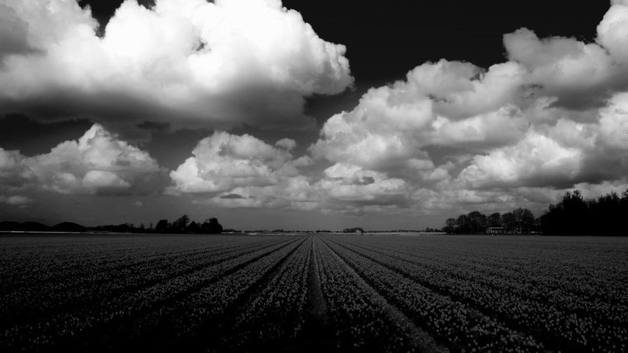 Hello World Check This Out Tulips Field Cloud - Sky Rural Scene Agriculture Eye4photography  EyeEm Gallery EyeEm Best Shots EyeEmBestPics Blackandwhite Blackandwhite Photography EyeEm Best Edits What Do You Think?