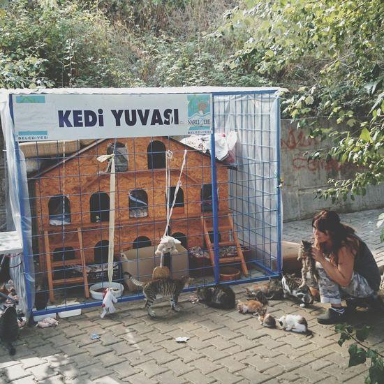 Animal Lover Voluntary Work Voluntariness Feeding  Kitten Cat House Text Communication Building Exterior Street Art