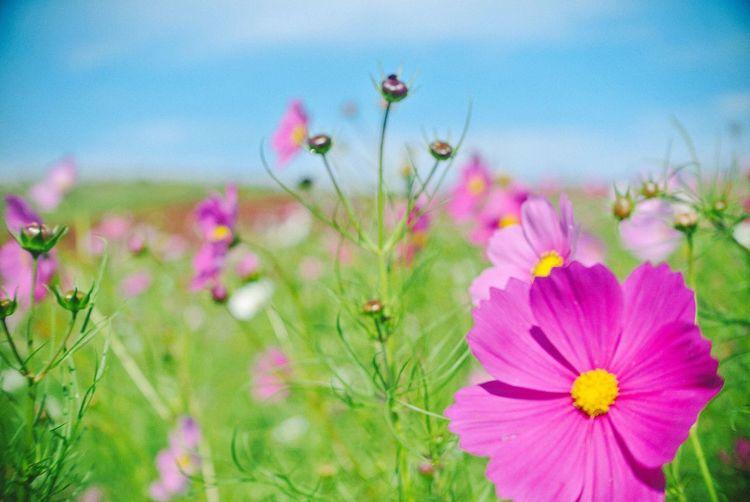 Fresh Flowering