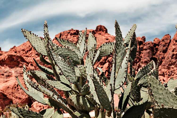 Close-up of cactus plant against cloudy sky during sunny day