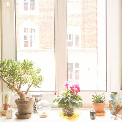 Copenhagen Denmark Light Fall Sun Plants Succulents Home