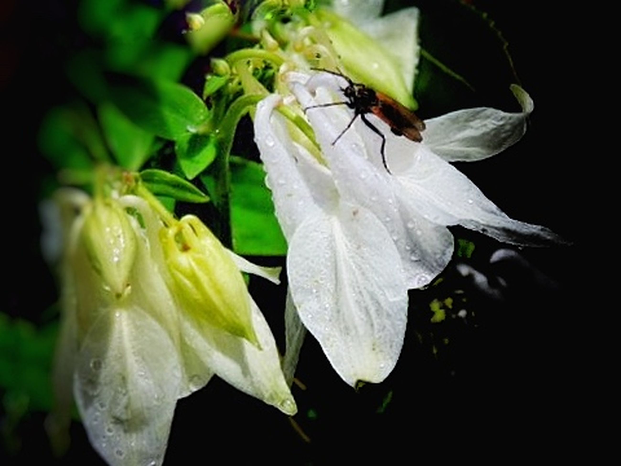insect, animal themes, one animal, flower, animals in the wild, wildlife, petal, fragility, freshness, close-up, bee, nature, flower head, beauty in nature, focus on foreground, growth, pollination, white color, flying, plant