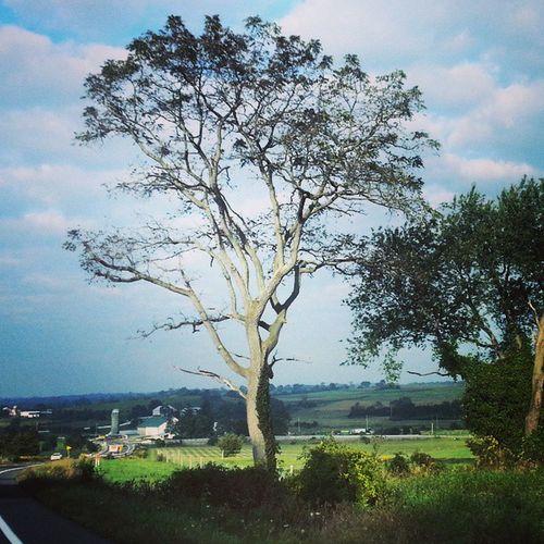 Wide branches TreePorn Earlyautumn Landscape Tusseymountain leaves skyporn trb_members1 rurex explorepa backroads pennsylvania