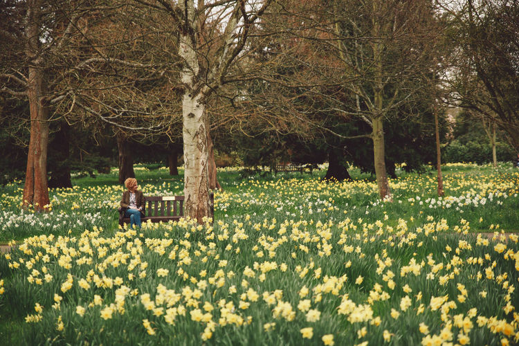 Woman Sitting On Bench Amidst Daffodils Blooming At Park