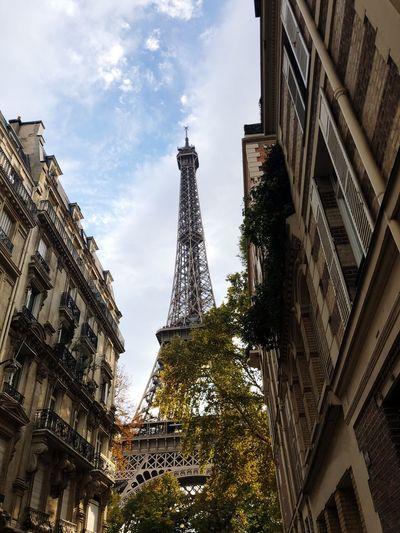 France Torre