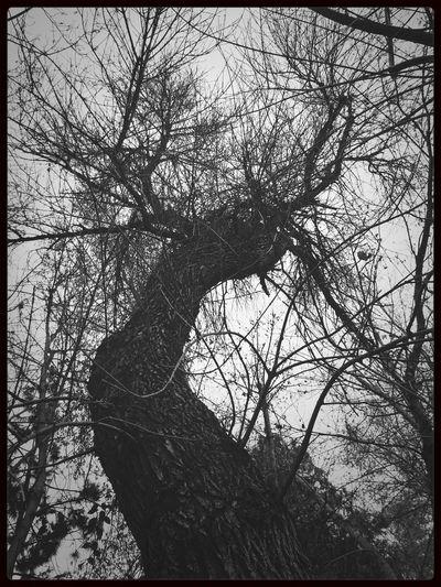 Gundlach Filter TreePorn Blackandwhite