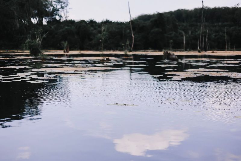 Surface level of lake against trees