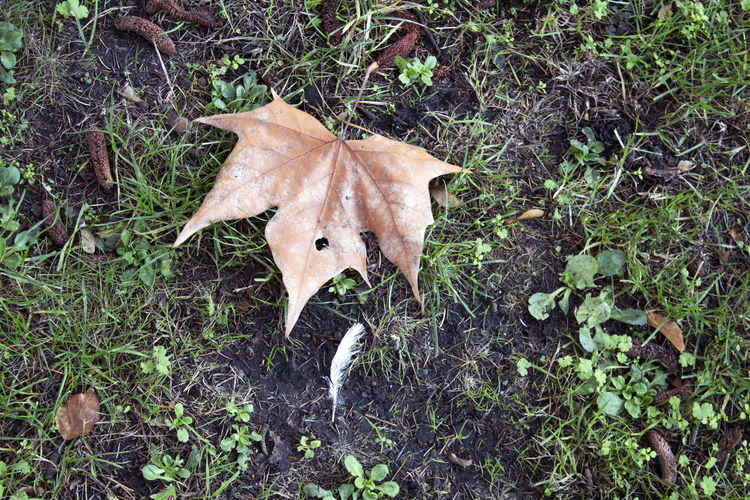 Leaf Plant Part Land Plant Field Nature No People High Angle View Dry Forest Outdoors Autumn Leaves Feather