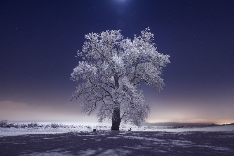 Tree on snow covered field against sky at night