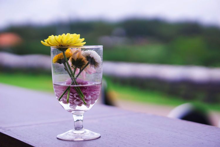 Close-up of purple flower on table