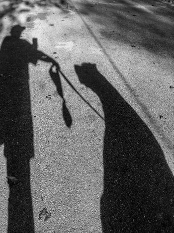 Fat Shadows Day Dog Shadow Dog Walking Focus On Shadow Leisure Activity Lifestyles Long Shadow - Shadow My Shadow Outdoors Real People Shades Of Grey Shadow Shadowplay Shadows Standing Togetherness