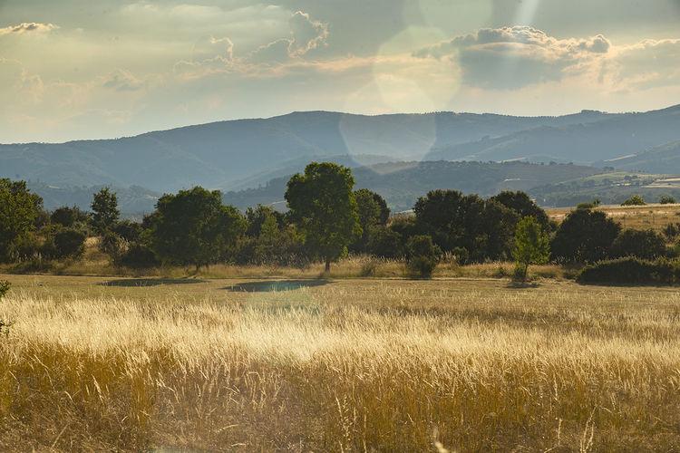 Planalto Transmontano Trás-os-Montes Bragança September 2018 Wheat Field Agricutural Landscape Cultural Landscape Landscape Photography Cloud - Sky Morning Light Direct Light Rewilding