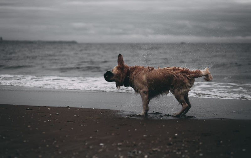 Dogs Dogs Of EyeEm Animal Themes Beach Day Dog Dogslife Dogstagram Domestic Animals Horizon Over Water Mammal Nature No People One Animal Outdoors Pets Sea Sky Water
