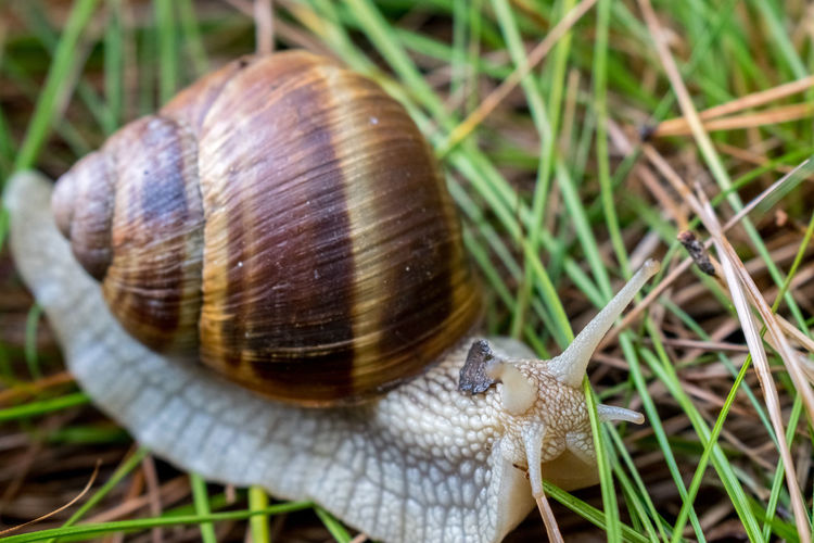 Snail in the grass in a chilly morning. Grass Macro Photography Natural Nature Nature Photography Snail Animal Macro Outdoors Shell Slow Snail🐌 Widerness Wild Wildlife