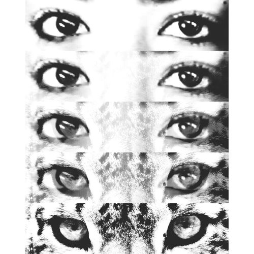 She's a wild one running free Art And Design Black And White Animalgirl Eyes First Eyeem Photo
