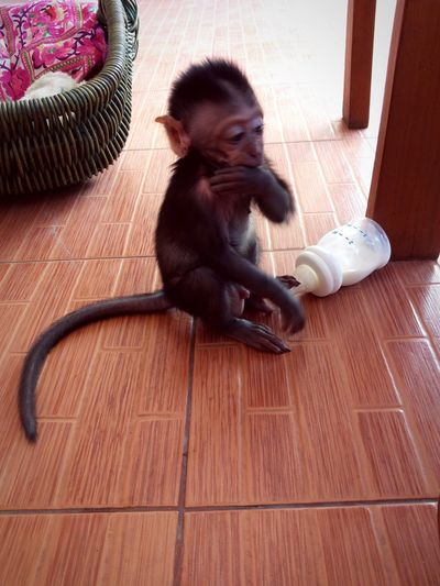 EyeEm Selects Indoors  Hardwood Floor Sitting Child Home Interior Childhood Full Length Mammal One Person Monkey Day People Animal Themes On The Road Close-up Nature