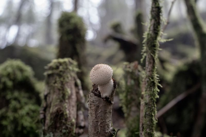 Moss EyeEm Nature Lover Mushroom_pictures Mushrooms Mushroom Magic Mushrooms EyeEm Selects Plant Growth Close-up Focus On Foreground Tree Nature Beauty In Nature No People Outdoors Green Color Plant Stem Forest Succulent Plant