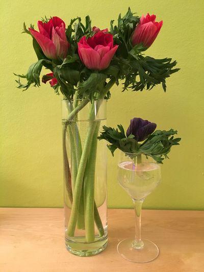 Anenomes Flower Vase