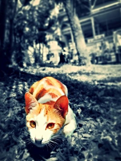 So Cute Cat Blurred Background Black An White Bagraound Yellow Eyed Cat Photo Object