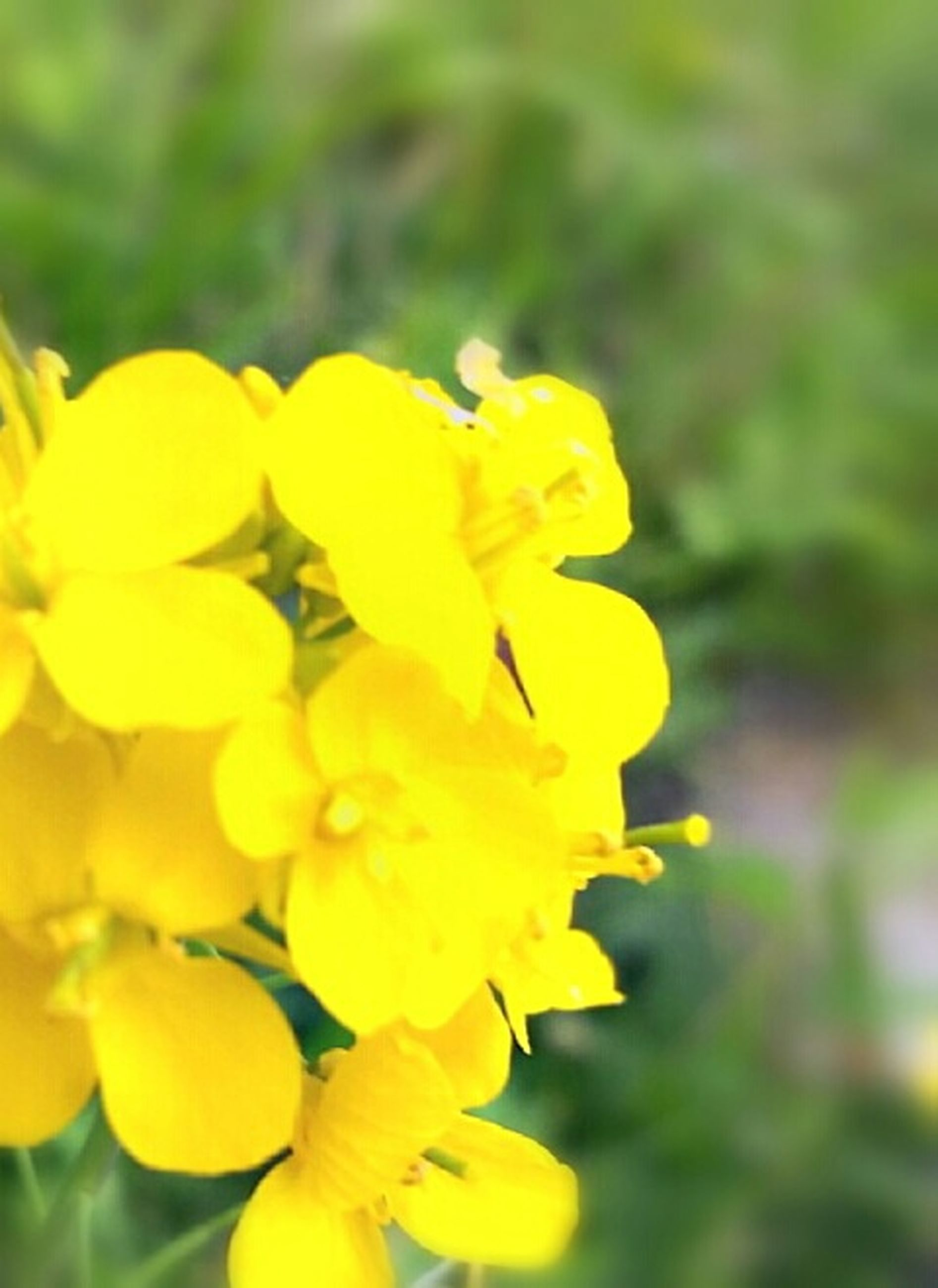flower, petal, yellow, freshness, fragility, flower head, growth, beauty in nature, focus on foreground, blooming, close-up, nature, plant, in bloom, park - man made space, selective focus, blossom, day, outdoors, springtime