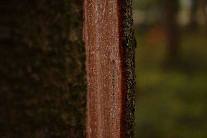 📸: Nikon D-3300, 18-55mm EyeEmNewHere Photograhy Nikonphotographer Nikonphotography Nikond3300 Open Forest Cutinhalf Focus On Foreground Close-up Wood - Material Day Tree Trunk No People Brown Tree Outdoors Nature