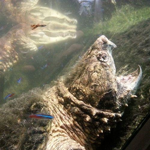 Turtle Crocodile Osloreptilpark @osloreptilpark Nofilter