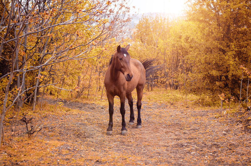 Portrait of a brown horse Animal Animal Themes Autumn Beauty In Nature Brown Day Equestrian Fall Forest Horse Leaf Mammal Mane Mare Nature No People One Animal Outdoors Portrait Stallion Standing Sun Sunlight Sunshine Tree
