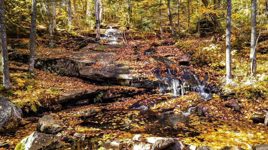 Forest Tree Land Plant Beauty In Nature Scenics - Nature Water Flowing Water Nature Autumn Tranquility No People Non-urban Scene Change Flowing Stream - Flowing Water Growth Tranquil Scene Rock WoodLand Outdoors