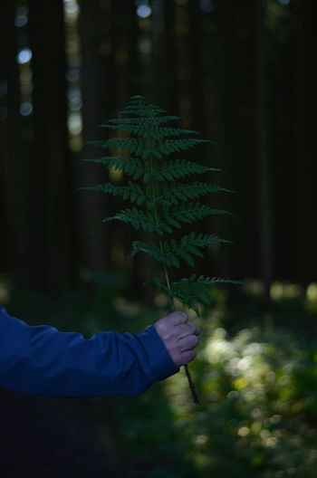 Cropped image of man holding branch of plant in forest