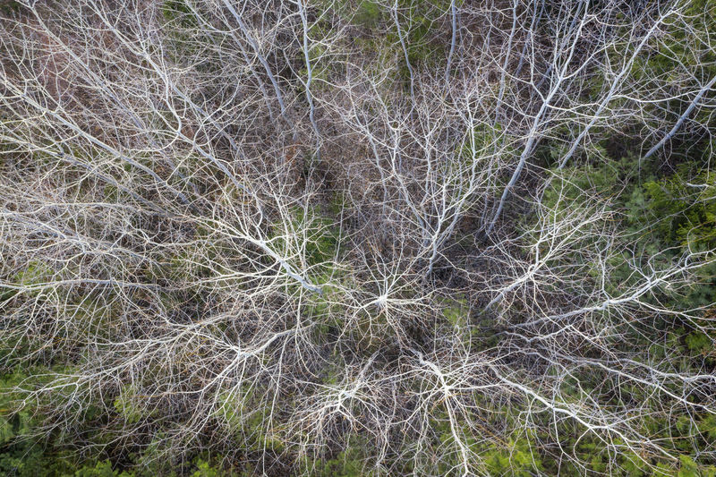 Aerial view of the forest in spring. Drone photography of forest pattern. Plant Tree Growth Beauty In Nature No People Nature Land Tranquility Forest Day Outdoors Forest Photography Forest Trees Forest Pattern Aerial Photography Aerial Landscape Aerial Shot Dronephotography Drone Photography Droneshot Forest Park Trees And Nature Treescape Spring Spring Forest Nature_collection Nature Photography Naturelovers Nature Abstract Landscape Colosrs