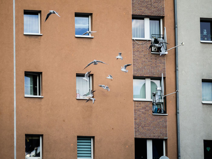 Window Architecture Built Structure Building Exterior Building Residential District Low Angle View No People Day Outdoors City Wall - Building Feature Side By Side Nature Full Frame Brown Apartment Urban Scene Animal Bird Seagull Group Of Animals Flying Townhouse Residential Structure Exterior