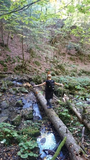 Rear view of hiker on stream in forest