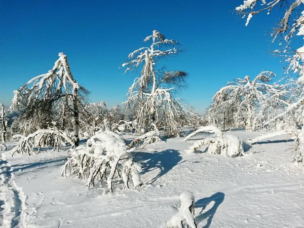 Winter Forest Mountains Trees Snow Alpine Nature Landscape Sky Blue Blue Sky White EyeEm Nature Lover EyeEm Best Shots Snowboarding Snow Day Alpine Skiing Russia Taking Photos Sunny Day Birches Blizzard 2016 Ice Age