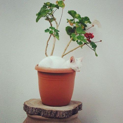 #animal #tier #katze #cat #blumentopf #flowerpot #griechenland #greece