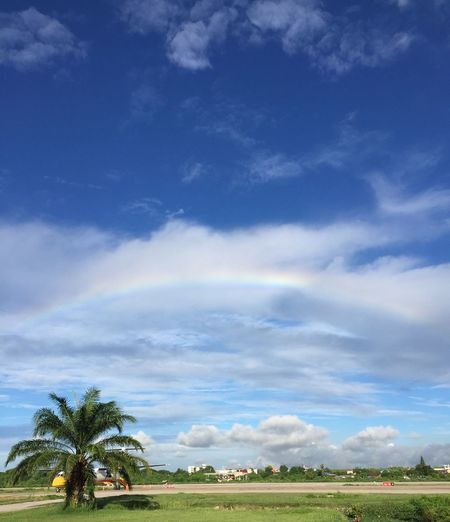 Plane Travel Rainbow Sky Rainbow Colors Beauty In Nature Blue Cloud - Sky Coconut Palm Tree Environment Green Color Landscape Nature Outdoors Palm Tree Plant Rain Bow Rainbow Scenics - Nature Sky Tranquil Scene Tree EyeEmNewHere
