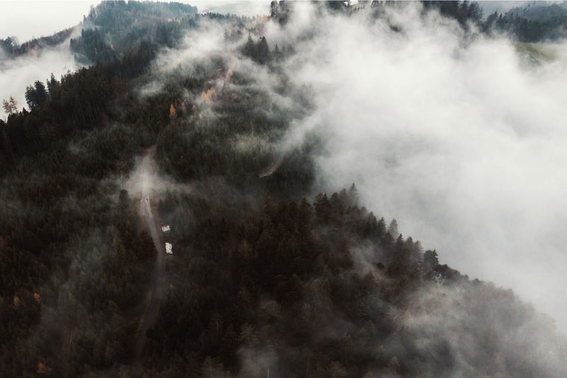 Forest Woods Tree Pine Tree Trees Fog Aerial View Aerial Photography Drone Photography Autumn Nature Scenics - Nature Outdoors High Angle View