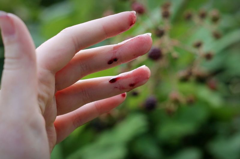 Blackberry season. Human Body Part Human Hand Outdoors Green Color People One Person Close-up Summer Fingernail Nature Food Freshness Blackberry Hand Fruit Berries One Woman Only Only Women Day Adult Young Adult Dripping Juice Juicy Fruit Delicious Food Stories