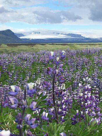 Flowering Plant Beauty In Nature Flower Plant Fragility Vulnerability  Sky