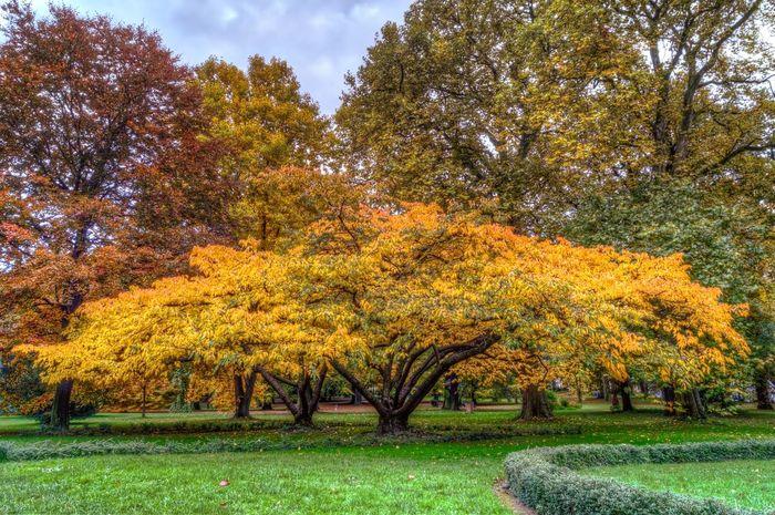 Tree Trees TreePorn Colorful Trees Colorfultree Baum Bäume Herbst Herbstfarben