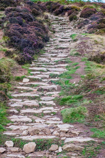 Ascending Hiking Path Stone Path Beauty In Nature Direction Environment Footpath Grass Heather Heather Flower Land Landscape Moorland Moors No People Outdoors Pathway Peak District  Rock Staircase The Way Forward Trail Tranquility Walking