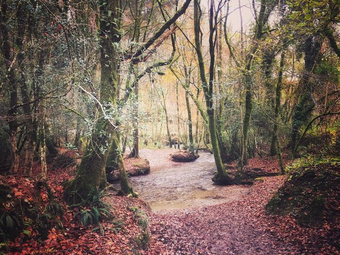 Forest Tree Nature Tranquility Tranquil Scene Beauty In Nature Autumn The Way Forward Scenics Outdoors Tree Trunk Landscape Day Growth No People Leaf Branch Nature_collection Nature Photography Woods Nature On Your Doorstep